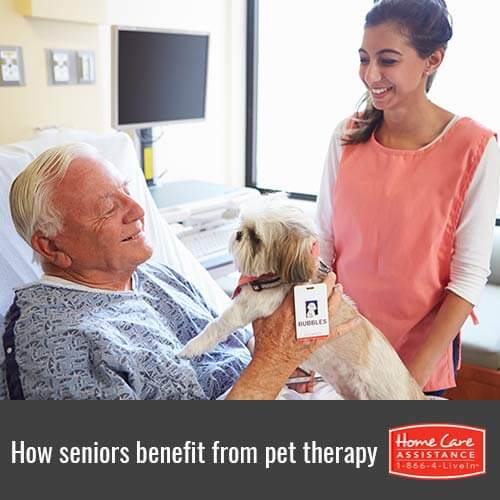 The Benefits of Pet Therapy for Seniors in Rhode Island