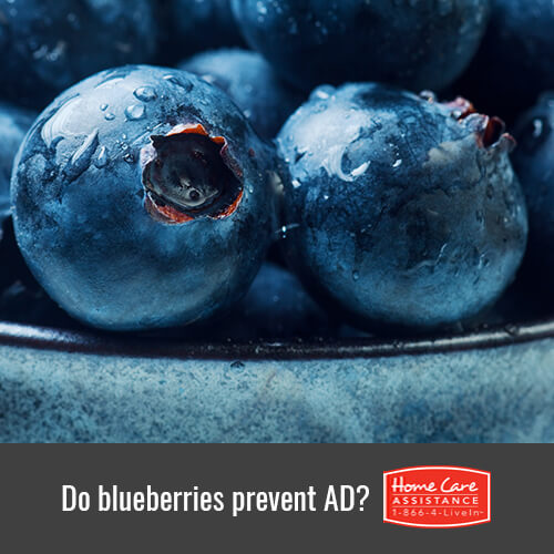 Can Blueberries Prevent the Onset of Alzheimer's in Rhode Island?