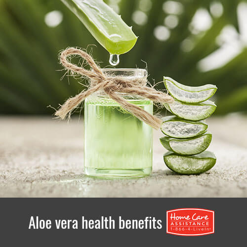 5 Ways Aloe Vera Benefits Elderly Health in Rhode Island