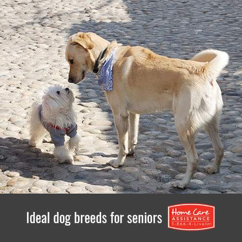 6 Perfect Dog Breeds for Seniors in Rhode Island